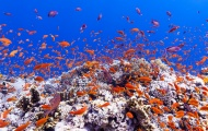 Scuba diving discovery