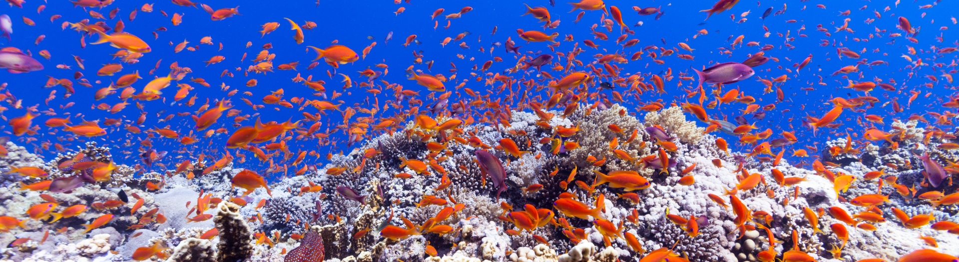Underwater diving prices with DUNE Red Sea
