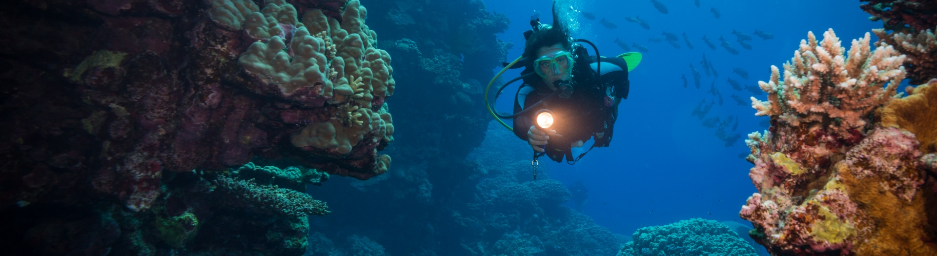 Formation Niveau 3 CMAS ou FFESSM | DUNE Red Sea